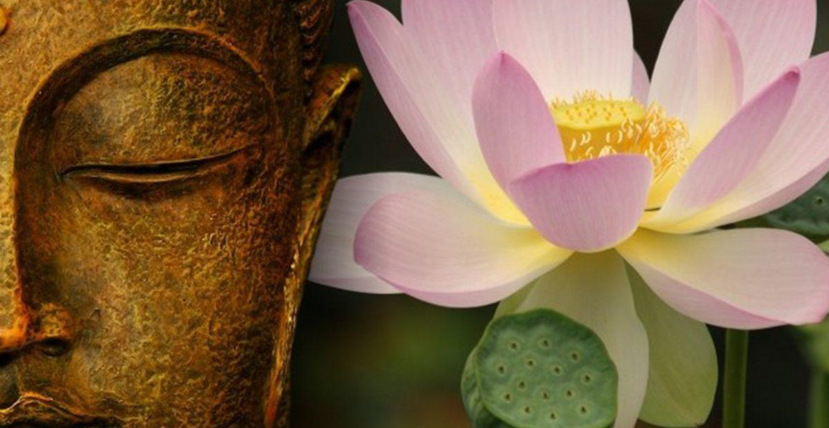 Điệp vấn luân hồi – cánh bướm đậu đài sen