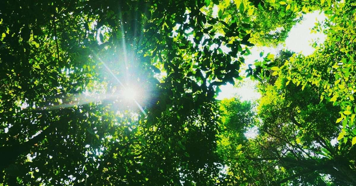Nắng tháng Tư dát vàng trên mái chùa nghiêng nghiêng linh diệu. Nắng thanh khiết như dáng Phật từ bi bước xuống trần gian.
