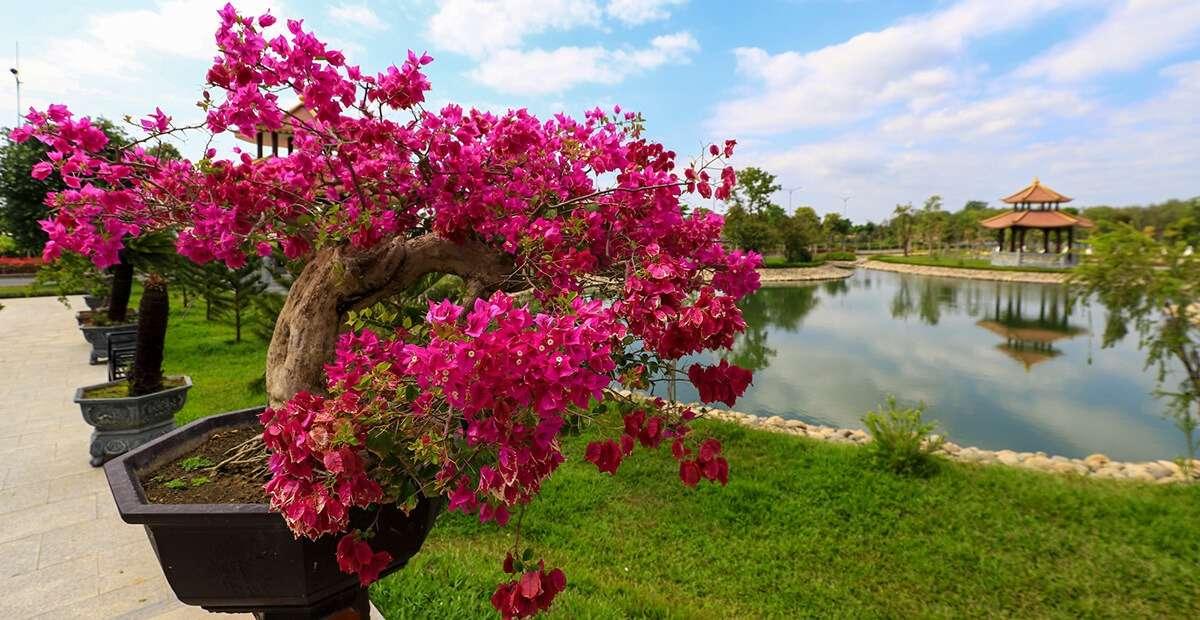 Khuôn viên được bố trí nhiều loại hoa tươi, cây cảnh quanh năm